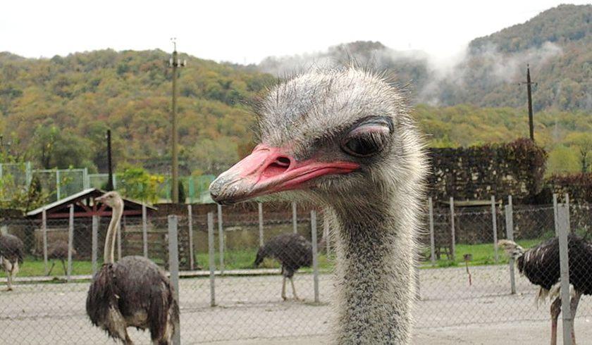Ферма страусов «Три Софии»